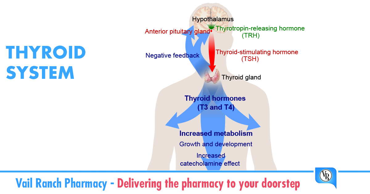 The Thyroid Gland A Major Player In Regulating Your Metabolism
