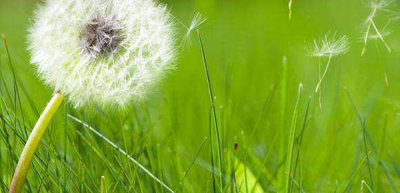 What causes spring allergies?